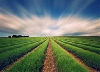 فروش و واگذاری شرکت رتبه 3 و 4 کشاورزی