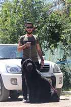 فروش سگ نیوفانلند نر ، خرید و فروش سگ نگهبان